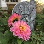 dahlia-digging-bloomadore